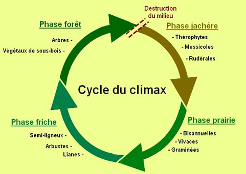 Cycle du climax